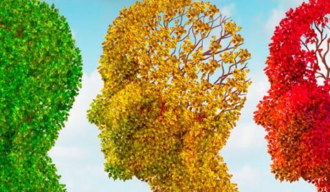 Three men's brains